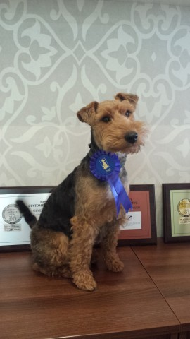 James Pendleton dog Lily won second prize for Best Female Dog